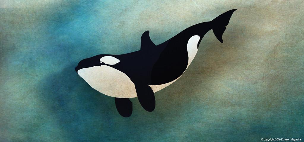 orca-lanka